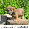 Cute a puppy of rate is on the stump of sunny canicular day - stock photo