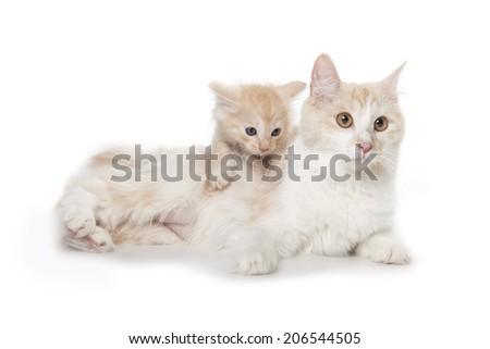 cute adult cat with little kitten isolated over white background - stock photo