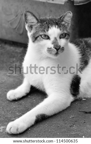 Cute alley cat lying on the ground - stock photo