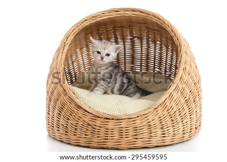 Cute American Shorthair kitten in wicker bed on white background isolated