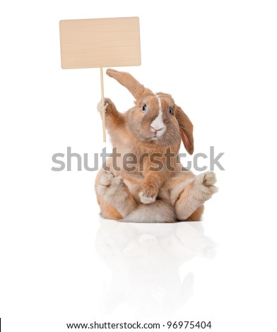 Cute and beautiful rabbit sitting. Sign in his paw over his head. Isolated on white background, reflection, a lot of copy space.