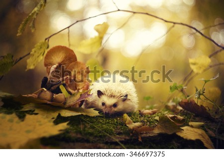 cute and beautiful rodent african pygmy hedgehog baby color black white in autumn forest and sun - stock photo