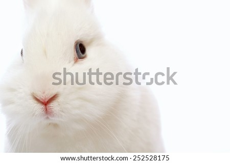Cute and cuddly. Closeup of beautiful white rabbit looking at camera  isolated on white background with copy space - stock photo
