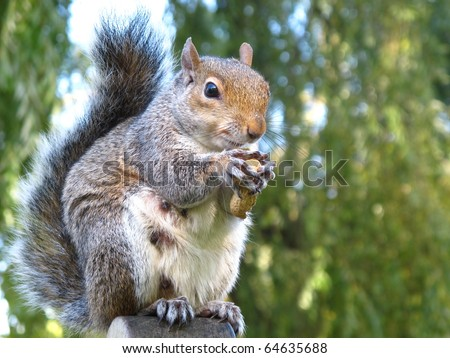 Cute and cuddly squirrel - stock photo