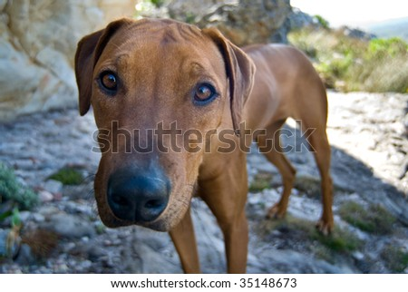 Cute and curious dog staring - stock photo