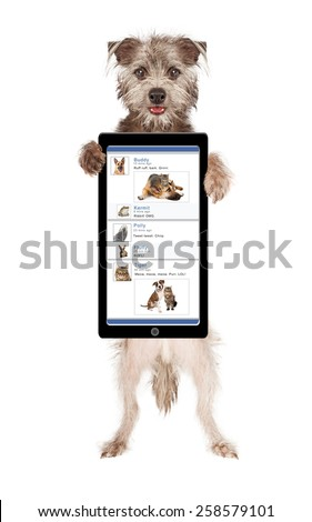 Cute and happy dog holding up a smartphone with a funny social media page on the screen - stock photo