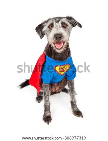 Cute and happy terrier crossbreed dog dressed in a super hero costume - stock photo