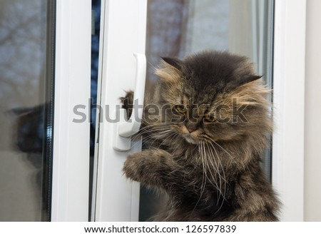 Cute angry domestic cat opening a window - stock photo