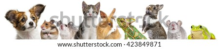 cute animals isolated over white - stock photo