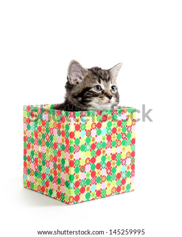 Cute baby American shorthair tabby cat inside of colorful box on white background
