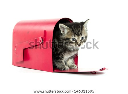 Cute baby American shorthair tabby cat inside red mailbox on white background
