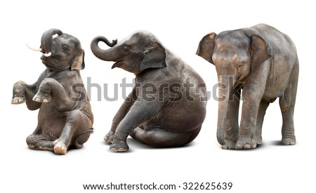 Cute baby asian elephant in various action isolated on white background - stock photo