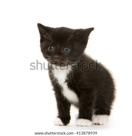 Cute baby black and white kitten isolated on white background - stock photo