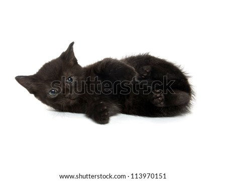Cute baby black cat laying down on white background - stock photo