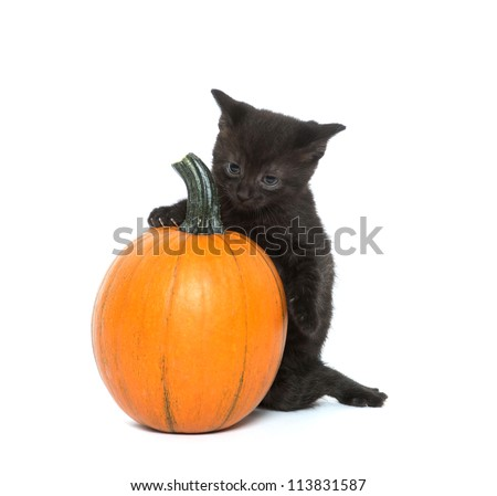 Cute baby black cat sitting next to pumpkin on white background