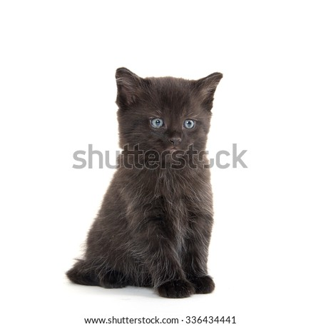 Cute baby black kitten isolated on white background - stock photo