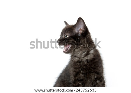 Cute baby black kitten on white background - stock photo
