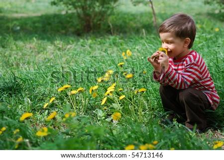 Cute baby boy smelling dandelion flower - stock photo