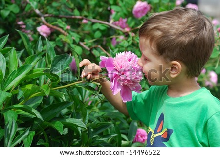 Cute baby boy smelling peony flower - stock photo