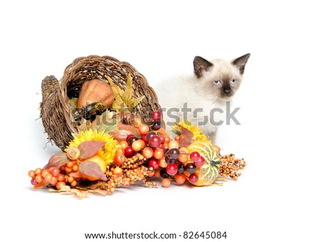 Cute baby cat and cornucopia on white background