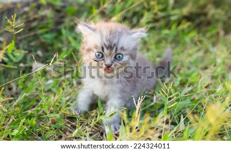 Cute baby cat in grass field