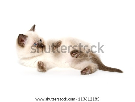 Cute baby cat laying down and playing on white background