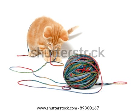 Cute baby cat playing with colorful yarn on white background - stock photo