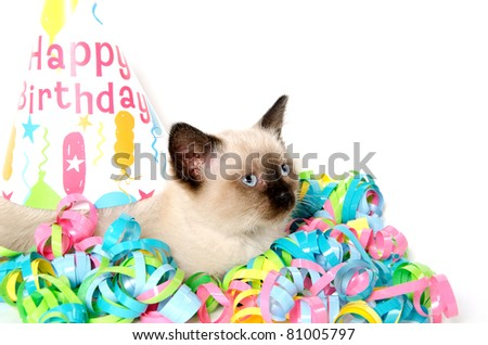 Cute baby cat sitting with birthday party decorations on white background