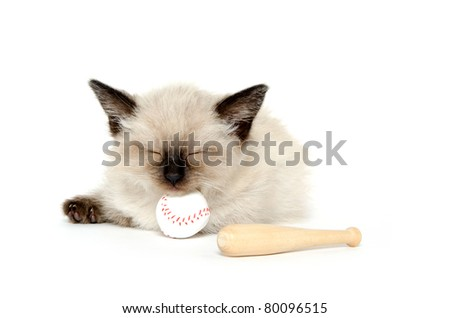 Cute baby cat sleeping with toy baseball and bat on white background
