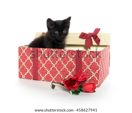 cute baby cat with Christmas gift box isolated on white background - stock photo