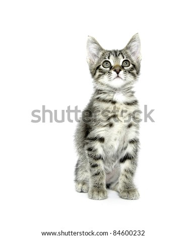 Cute baby cat with tabby markings on white background - stock photo