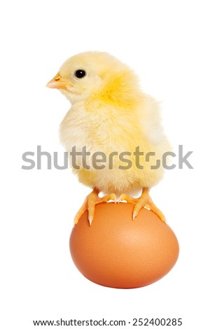 Cute baby eastern animal isolated - stock photo
