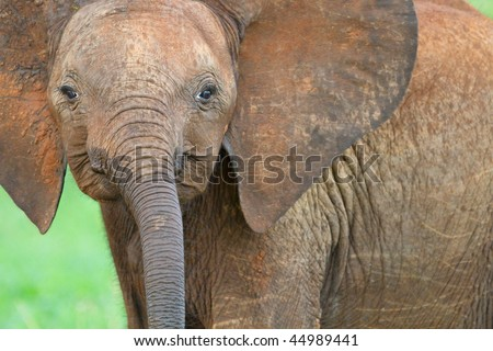 Cute baby elephant in Tarangire national park, Tanzania