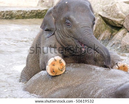 Cute baby elephant playing in water - stock photo