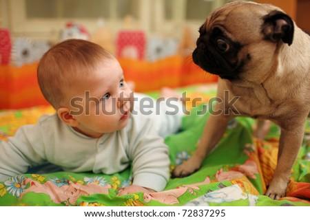 Cute baby girl looking at pug dog. Closeup, shallow DOF. - stock photo