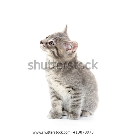 Cute baby gray kitten isolated on white background - stock photo