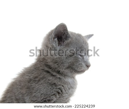 Cute baby gray kitten sitting on white background with its eyes closed