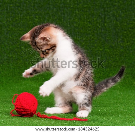 Cute baby kitten playing red clew of thread on artificial green grass - stock photo