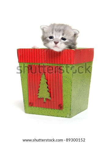 Cute baby kitten sitting inside of holiday flower pot on white background - stock photo