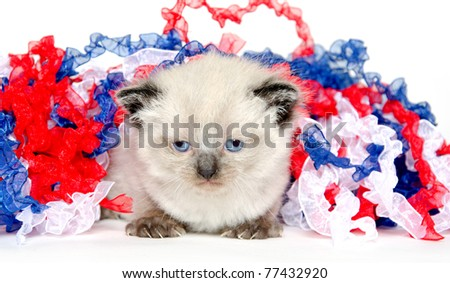 Cute baby kitten with Fourth of July decorations on white background