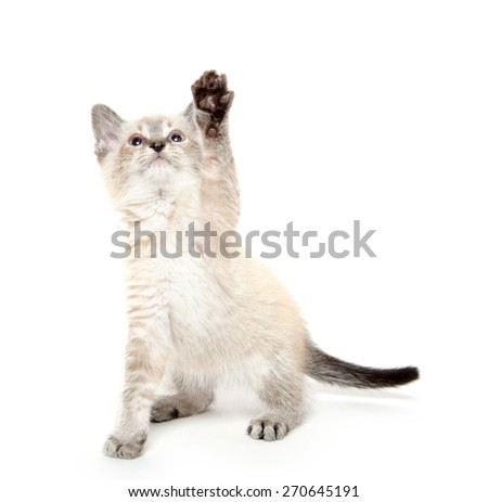 Cute baby kitten with paw in the air on white background - stock photo