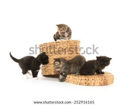 Cute baby kittens playing on a basket isolated on white background - stock photo