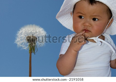 cute baby looking at dandelion - stock photo