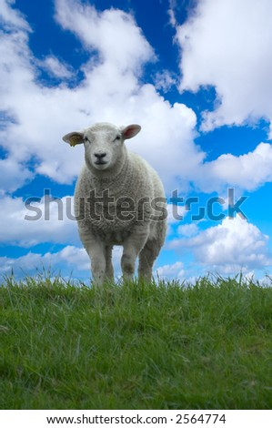 cute baby sheep on top of the hill - stock photo