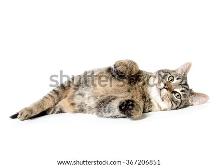 Cute baby tabby cat laying down isolated on white background - stock photo