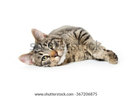 Cute baby tabby cat laying down isolated on white background