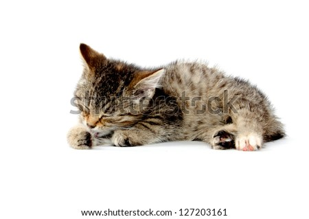 Cute baby tabby cat taking bath and laying down on white background - stock photo