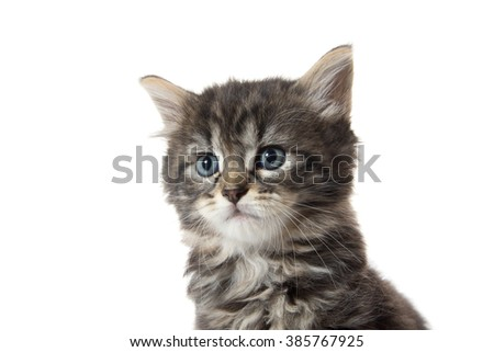 Cute baby tabby kitten face sitting isolated on white background
