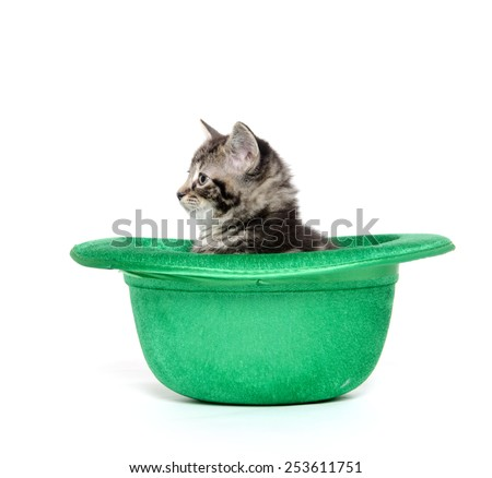 Cute baby tabby kitten inside of a green hat for St. Patrick's Day on white background