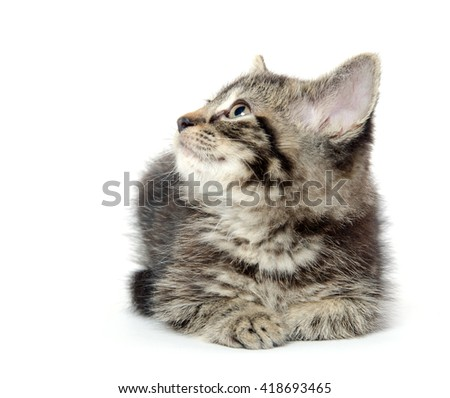 Cute baby tabby kitten laying down isolated on white background - stock photo